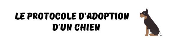 protocole adoption chien