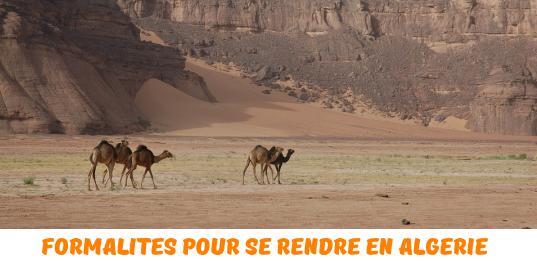 formalites-algerie
